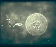 Решение проблемы зачатия: с чего начать?
