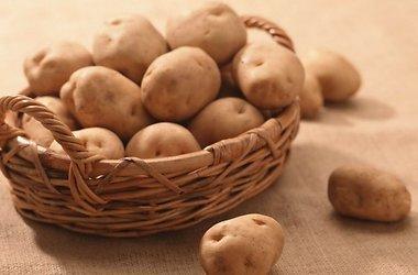 Поговорим о картофеле