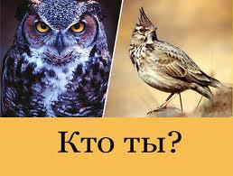 Жаворонок или сова?