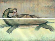 Доисторическая черепаха размером с автомобиль