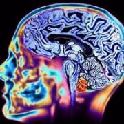 За любовь и секс отвечают разные области мозга